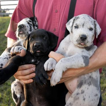 Puppy Adoption Near Me