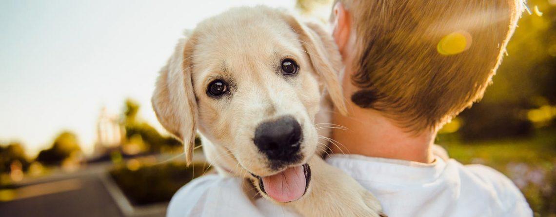 Choosing The Best Dog Breed