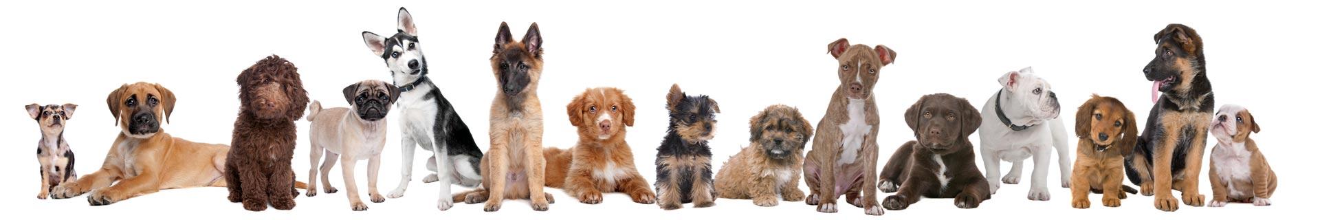 Online Puppy Adoption
